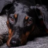 Après ses vacances, il va chercher son chien dans sa pension et découvre qu'il doit être euthanasié