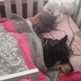 L'adorable sieste d'une enfant avec son chien... (Vidéo du jour)