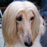 Chirurgie esthétique pour chiens : la scandaleuse tendance qui cartonne en Corée