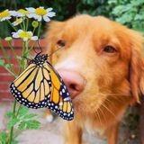 Ce chien porte une couronne de fleurs dont les papillons raffolent, et les photos sont trop belles