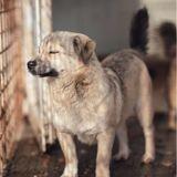 Covid-19 : pour la première fois, une ville chinoise interdit la consommation de viande de chiens et chats