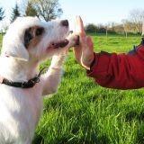Incroyable Talent : un chien brille en dog dancing