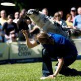 Sport canin : le Dog Frisbee débarque en France !