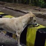 Sans-abri, il fait passer la survie des chiens errants avant la sienne