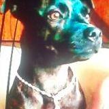 La prison ferme pour avoir torturé et tué son chien