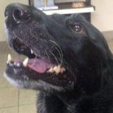 Ce que le vétérinaire va découvrir dans le ventre de ce chien est inouï !