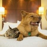 Les 4 plus beaux hôtels de luxe pour chiens et chats