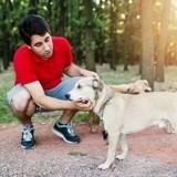 5 métiers à faire si vous voulez travailler avec des chiens