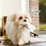 Restez en contact avec votre chien grâce à SmartCam !