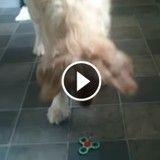 Ce chien devient totalement fou devant une toupie Hand Spinner (Vidéo du jour)