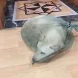 Ce chien devait finir en viande, il décide de lui donner une chance en le sauvant