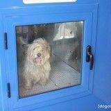 Une machine à laver pour chien