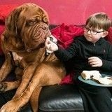 Un chien prend tout le monde de court et découvre le handicap de son jeune maître