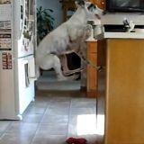 Le chien et le trampoline invisible (Vidéo du jour)