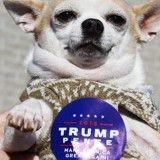 Pas de chien présidentiel pour Donald Trump ?