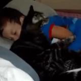 Quand un chat très câlin retrouve enfin son petit humain (Vidéo du jour)