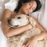Dormir avec son animal de compagnie : bonne ou mauvaise chose ?