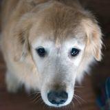 Doumia la chienne maltraitée : le calvaire est terminé