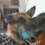 18 mois après sa disparition, il retrouve son chien sur Internet