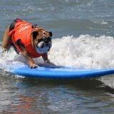 Des chiens et du surf, une compétition pour la bonne cause