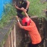 Ces deux ados ont tout fait pour sauver un chaton coincé dans un égout (Vidéo)