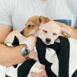 Ce couple recueille des chiots chez lui pour les préparer à leur future maison d'adoption