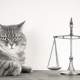 Droit des animaux : donnons une personnalité juridique à l'animal