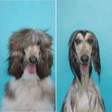 Des chiens avant et après le bain : des photos qui décoiffent !