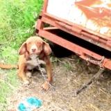Après lui avoir brisé les pattes, il laisse son chien attaché à un camion durant 10 jours sans nourriture