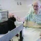 Ce chat voyage sur son chariot royal pour mettre de la vie à l'hôpital