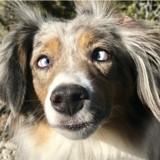 Ce chien aveugle avait peur de tout jusqu'à ce qu'il rencontre sa sœur