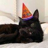 Ce chaton à deux visages vient de passer un cap auquel personne ne croyait !