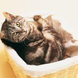 Anti puce : quels produits pour mon chat ?