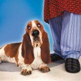5 gadgets pour vivre en harmonie avec son chien