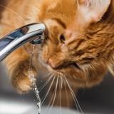 Comment savoir si votre chat boit assez d'eau ?
