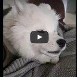 Ce chien a la plus mignonne des réactions lorsque son humaine siffle (Vidéo du jour)