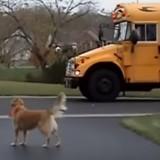 Ces chiens accueillent avec joie le retour de leurs petits maîtres de l'école, et c'est adorable (Vidéo du jour)