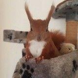 Tintin, l'écureuil domestique qui va vous faire craquer