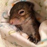 Souffrant d'une grave maladie, cet écureuil se bat pour survivre