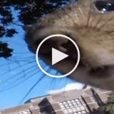 Un écureuil vole une caméra et filme son parcours entre les arbres (Vidéo du jour)