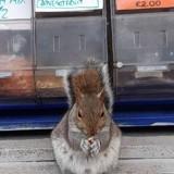 Il passe devant une boutique et s'arrête net face à une petite pancarte : il est obligé de prendre une photo !