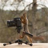 Ce photographe créé des décors pour les écureuils dans son jardin, et le résultat est adorable (Vidéo)