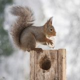 Vous allez craquer devant ces écureuils roux qui célèbrent Pâques !