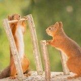 Des écureuils aux Jeux Olympiques… ça donnerait quoi ?