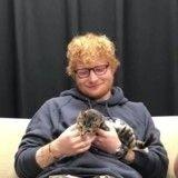 Ed Sheeran surpris par des chatons pendant une interview (Vidéo)