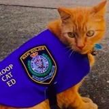 Ed, le chat errant devenu chat policier !