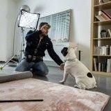 TF1 diffuse un reportage sur les éducateurs canins, le Web s'insurge