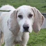 4 jours après son adoption, cette chienne a été ramenée au refuge : l'excuse de ses adoptants est ridicule