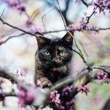 Eevee, le chat sauvé qui fait vivre de folles aventures à sa propriétaire