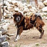 Chenil savoyard : un éleveur cruel devant la justice